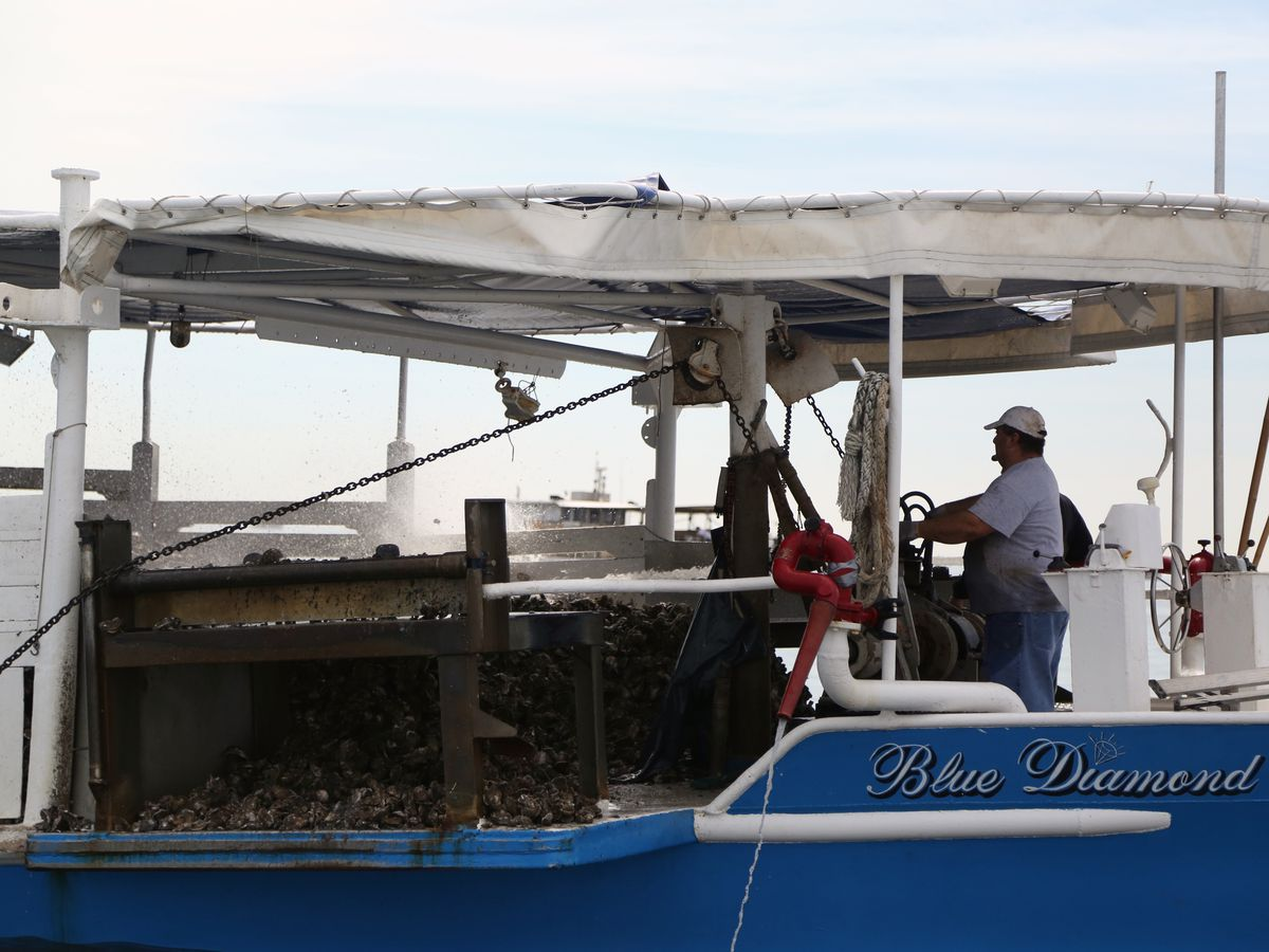 La. seafood industry struggling during pandemic; business owners hope to see relief soon
