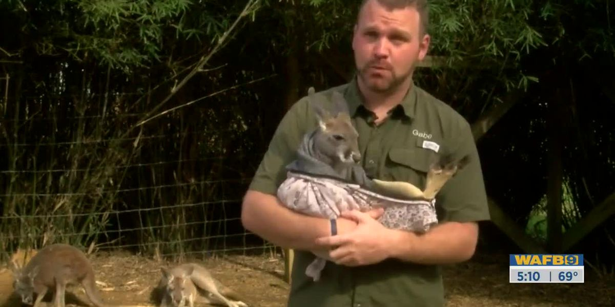 Owner of Barn Hill Preserve heading to Australia to help animals affected by brush fires