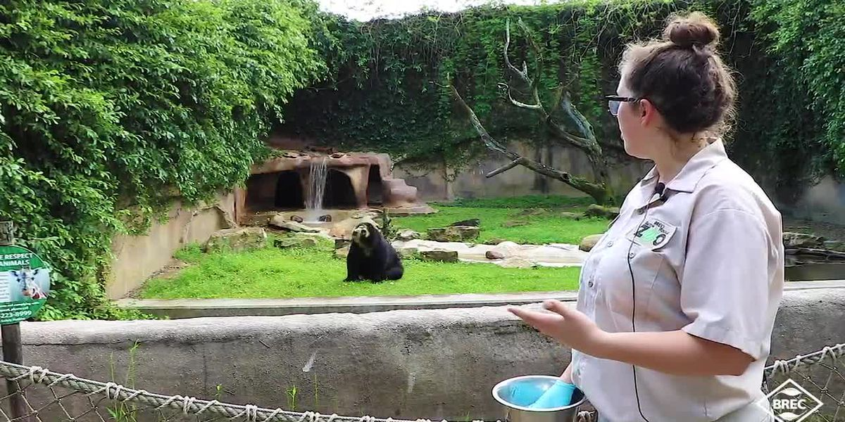 Animal encounters - Video Series: Spectacled Bear