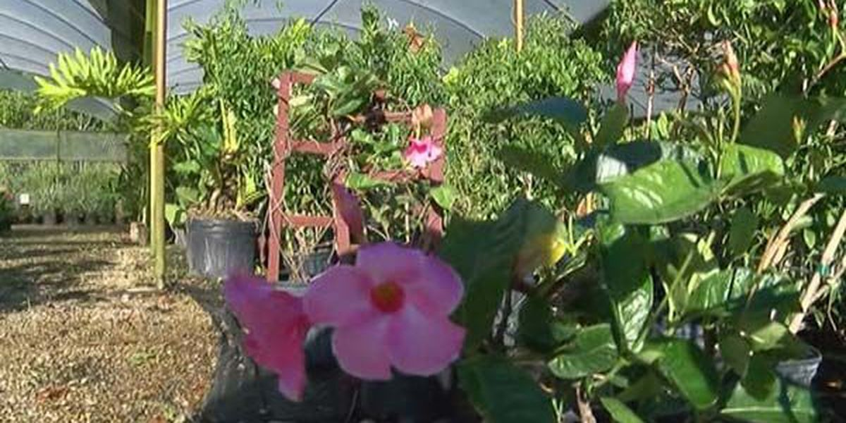 Homeowners urged to hire licensed landscapers