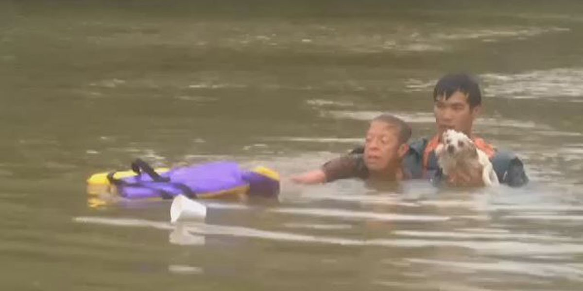 Dramatic video shows woman, dog being rescued from sinking car