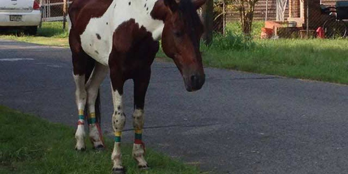 Horse removed from downtown BR gains new home after adoption