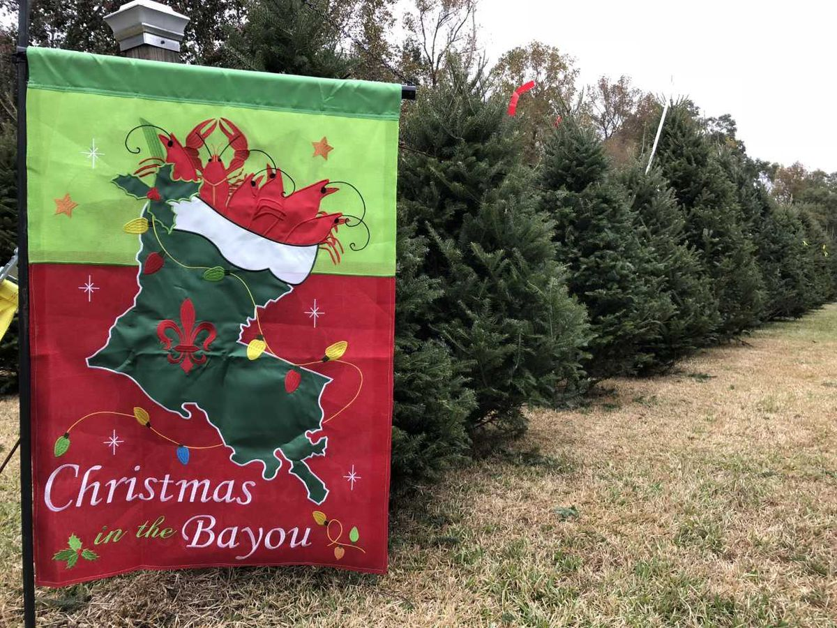 Local families get their Christmas tree shopping done early
