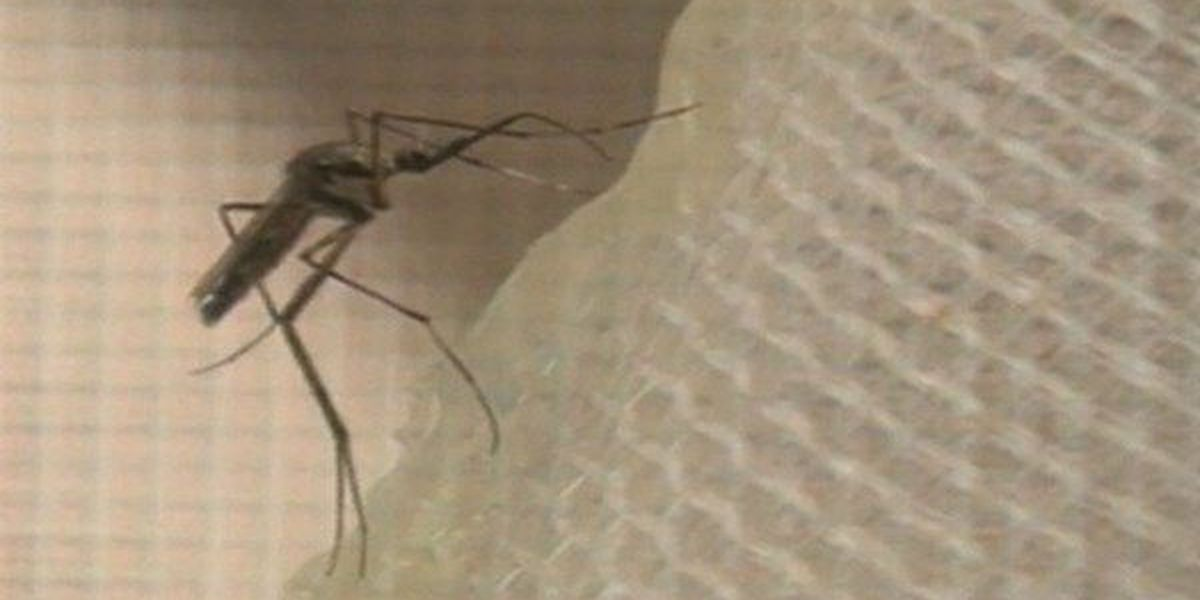 Mosquito sample in WBR Parish tests positive for West Nile Virus