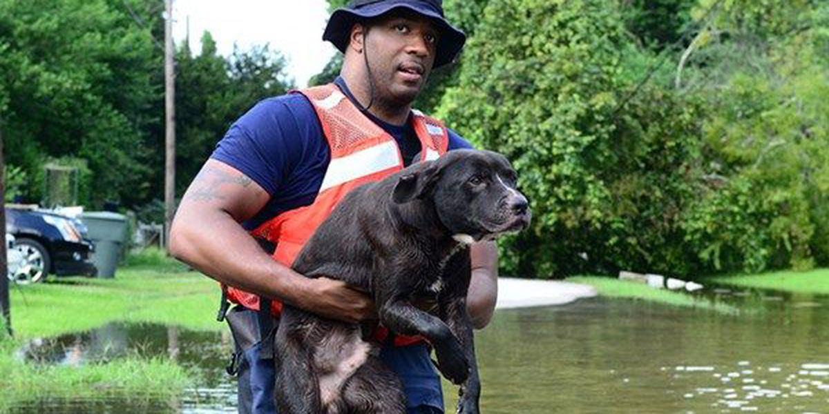 PHOTOS: Coast Guard crews rescue dogs near Port Arthur in the wake of Hurricane Harvey