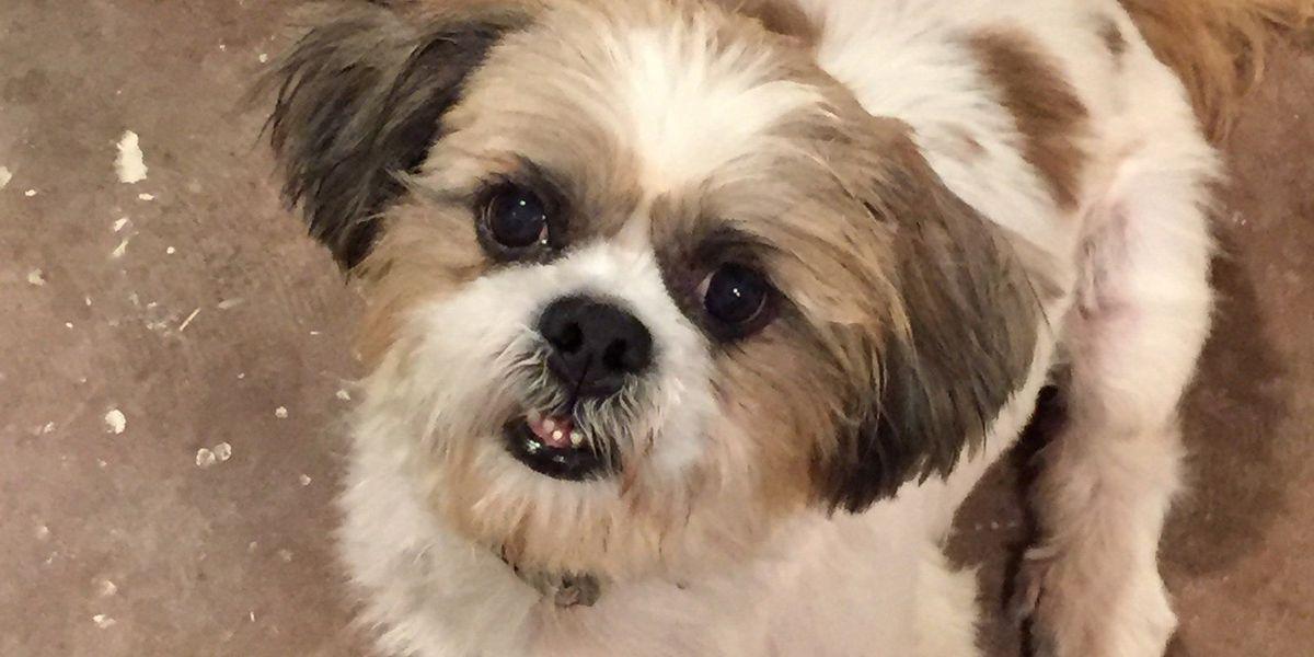 SPCA of Livingston holds pet adoption event