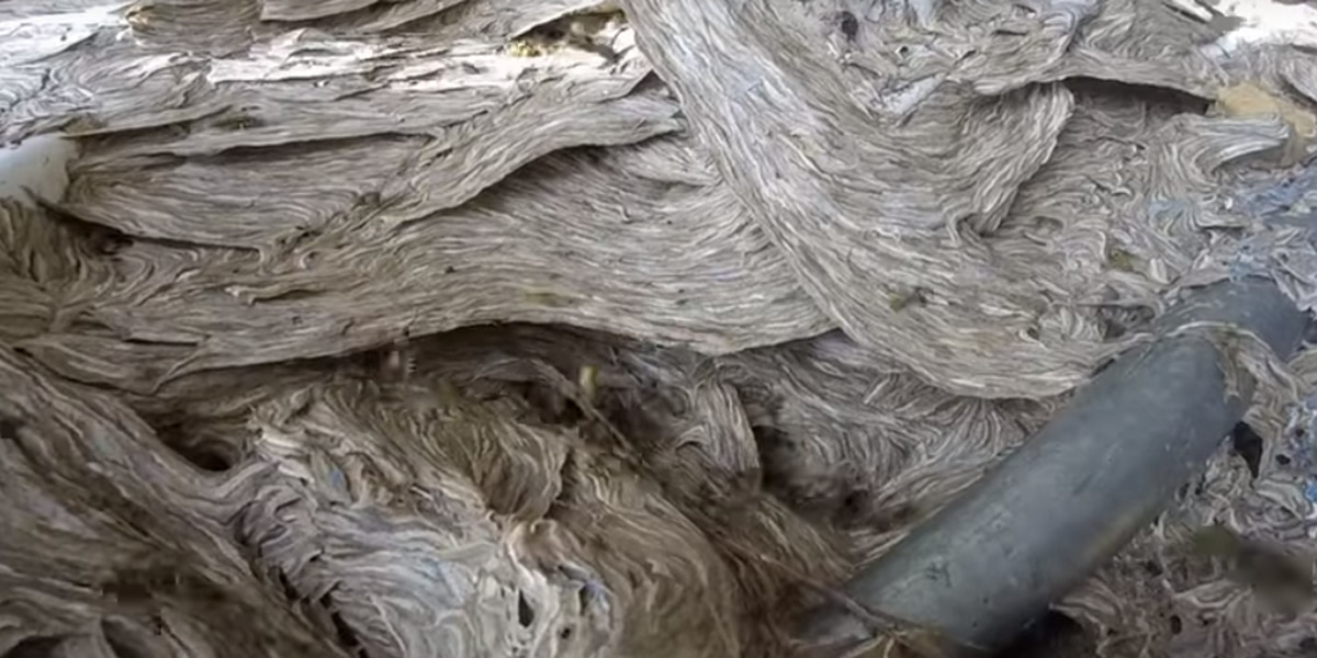VIDEO: Exterminator shares nightmarish footage of massive hornets' nest removal