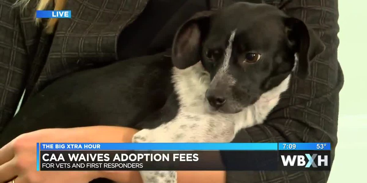 Baton Rouge shelter waiving adoption fees during special Veterans Day Event - 7 a.m.