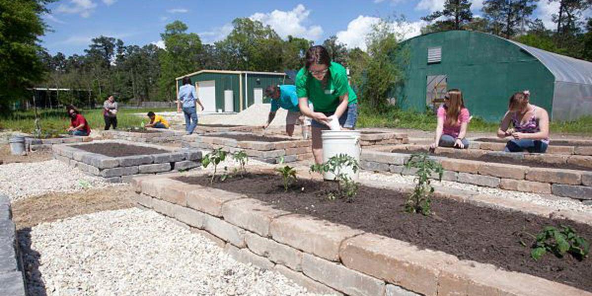 Students at Southeastern start community garden on campus