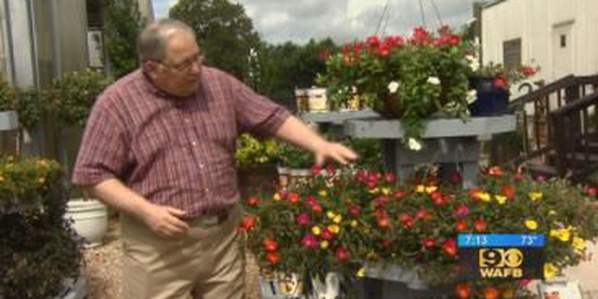 GET IT GROWING: Purslane, a colorful plant ideal for late-summer gardening