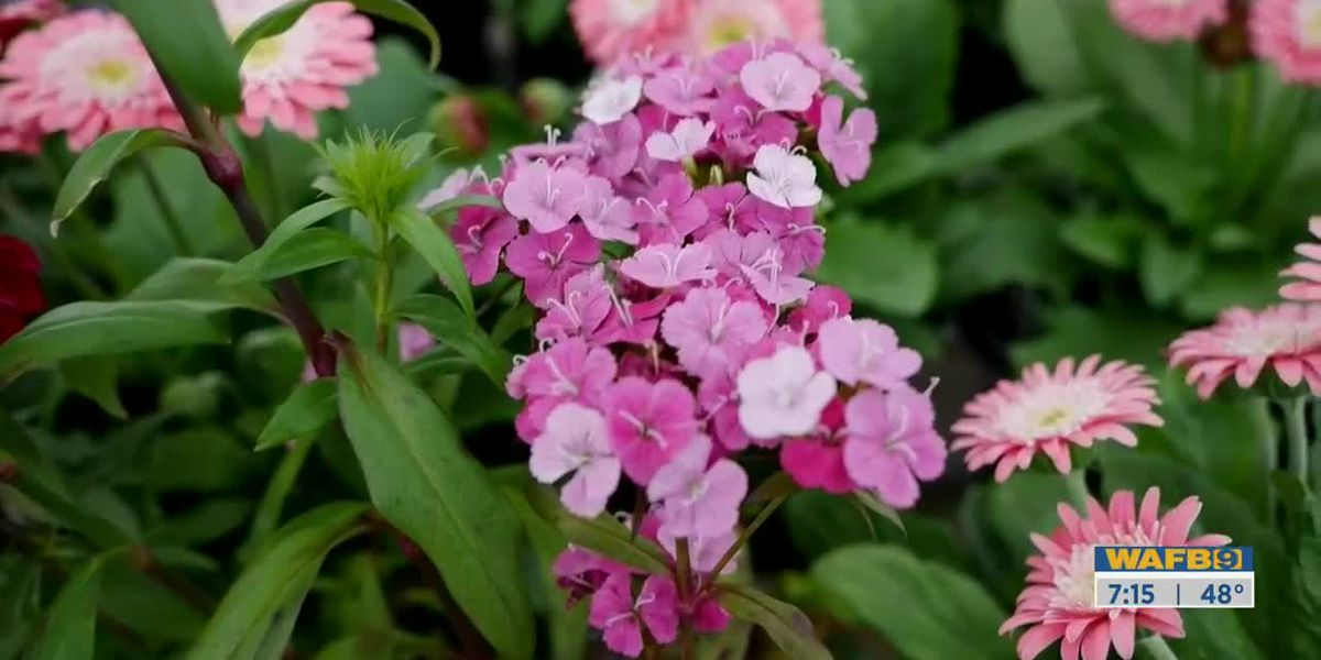 GET IT GROWING: Valentine's Day Plants