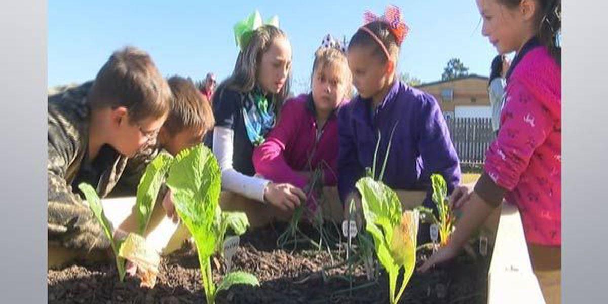 AHA program teaching kids about gardening