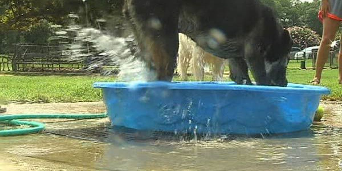 Ways your dog can beat the heat this summer