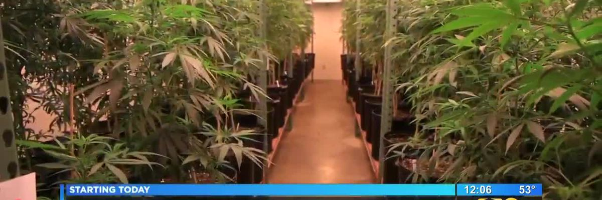 Southern University hosting cannabis industry forum