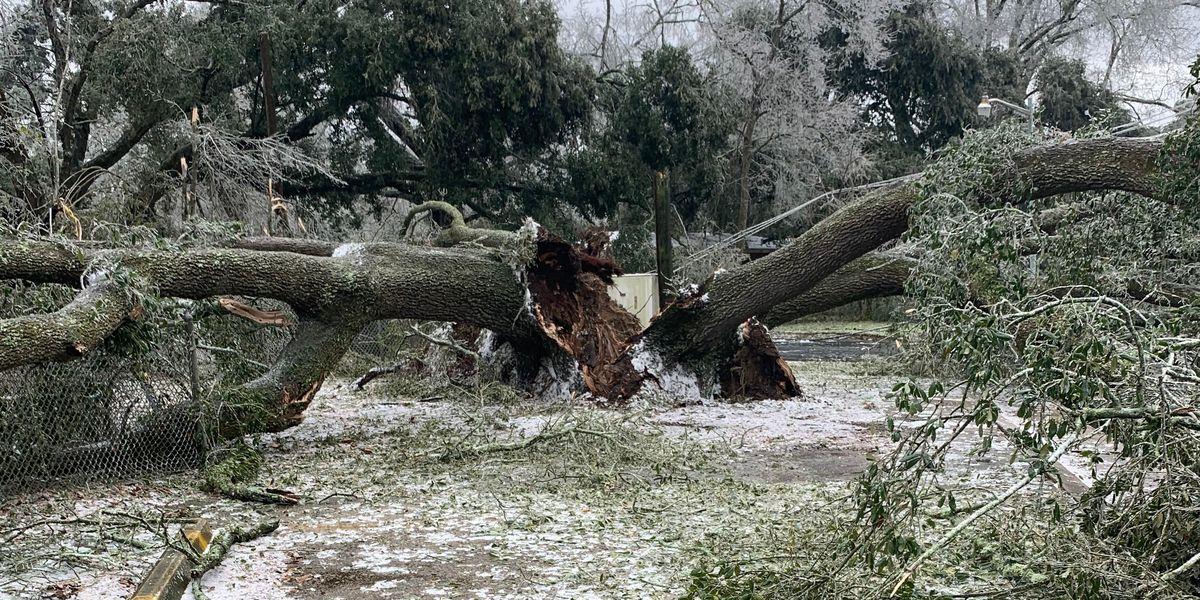 Officials provide update with winter storm debris cleanup in EBR Parish