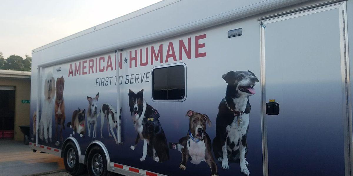 American Humane hosting free veterinarian clinic in St. Landry Parish