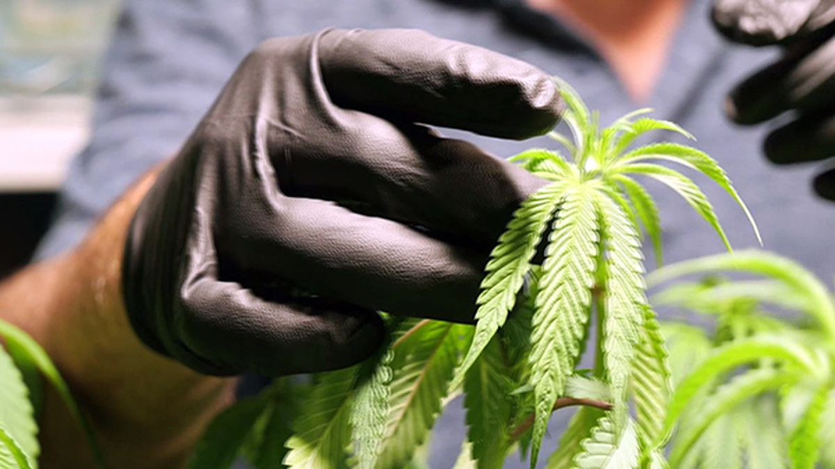 Medical marijuana expansion nears final passage in Louisiana
