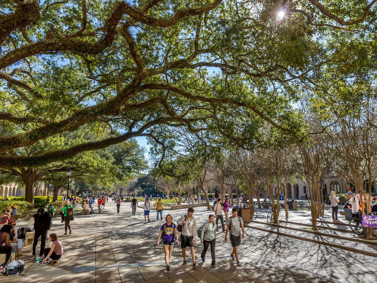 LSU SGA surveys students about problem areas for pedestrians on campus