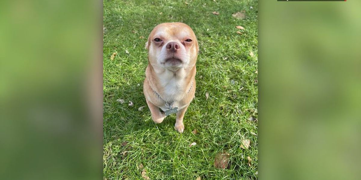 'Neurotic, man hating' dog wins hearts after brutally honest adoption call