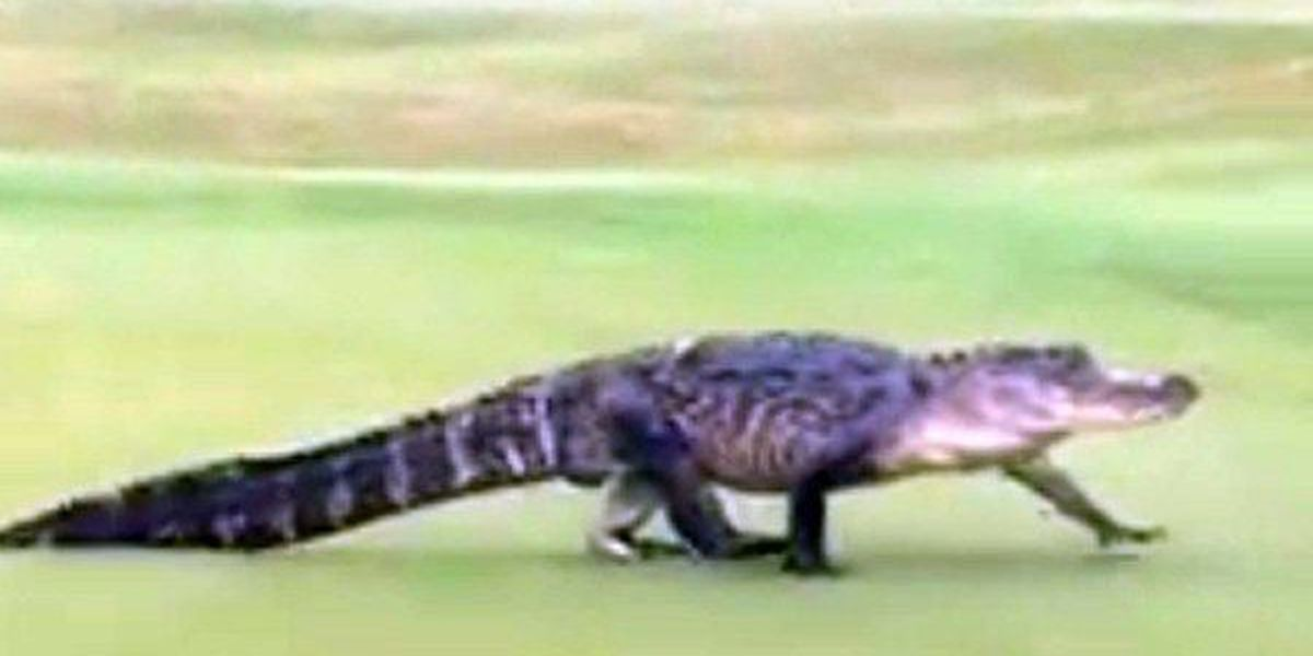 LDWF, Louisiana Trappers and Alligator Hunters Association to hold free trapping workshops