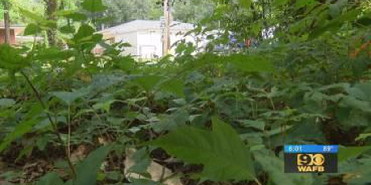 Vietnam War veteran hoping to get dirty lot across from his home cleaned up